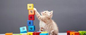 cats_seo